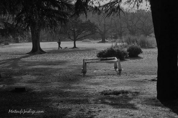 午后の公園です