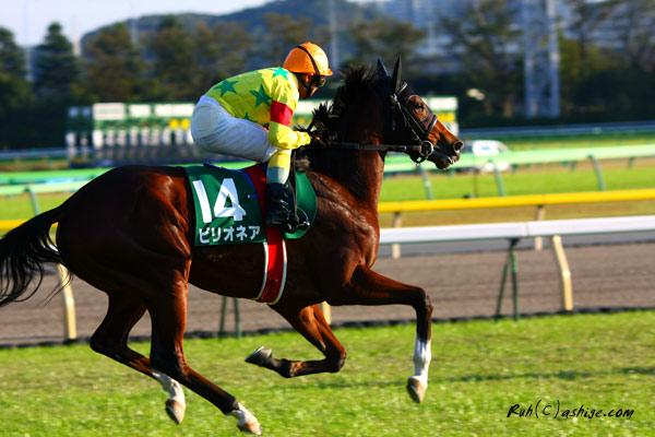 ビリオネア 2012 東京競馬場