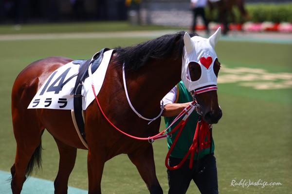 ラララ 2013 東京競馬場