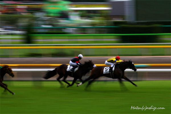 マーブルカテドラル 2013 東京競馬場