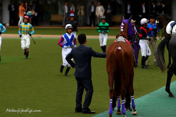 レイズアセイル 2013 東京競馬場