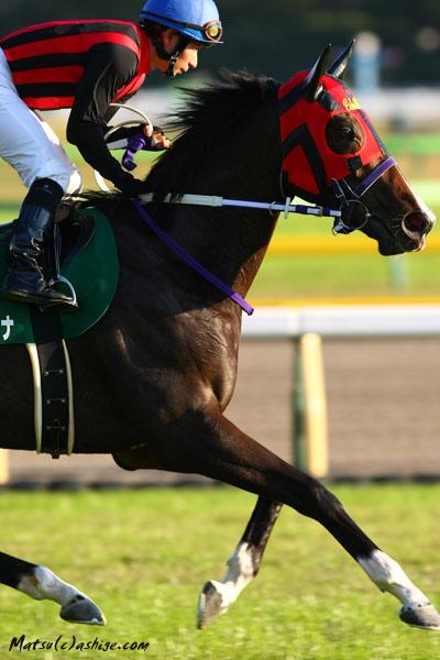 エイシンラトゥナ 2012 東京競馬場
