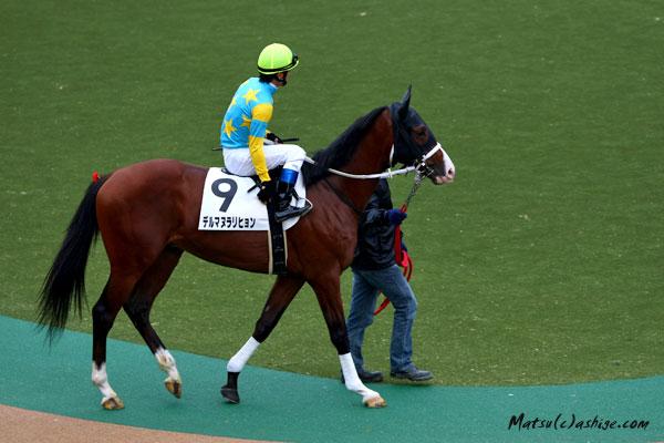 デルマヌラリヒョン 2012 東京競馬場