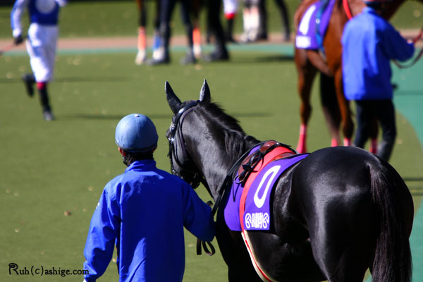 模擬レース 2012 東京競馬場