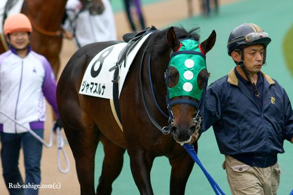 ジャマスルナ 2013 東京競馬場