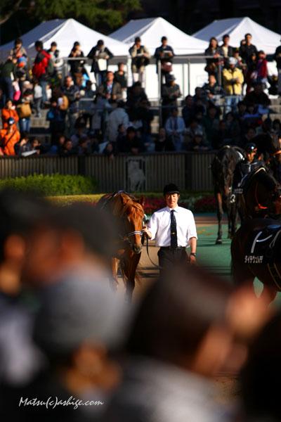 アジアエクスプレス 2013 東京競馬場