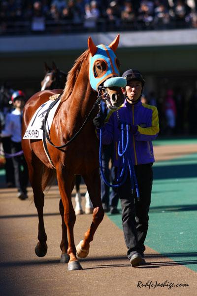 エンディアイモン 2013 東京競馬場