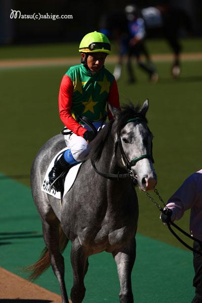 ギンザブルースター 2012 東京競馬場