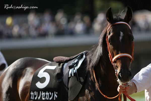 カツノセカンド 2009 東京競馬場