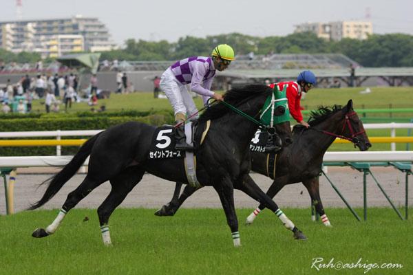 セイントフォース 2010 東京競馬場