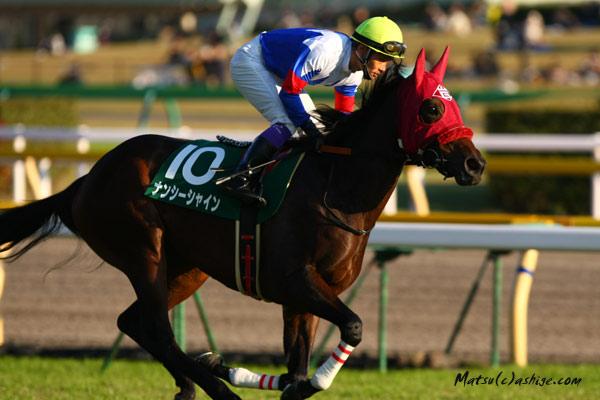 ナンシーシャイン 2012 東京競馬場