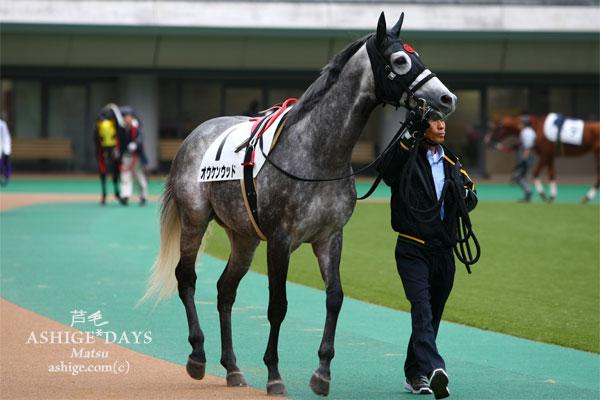 オウケンウッド ASHIGE*DAYS 2013 東京競馬場