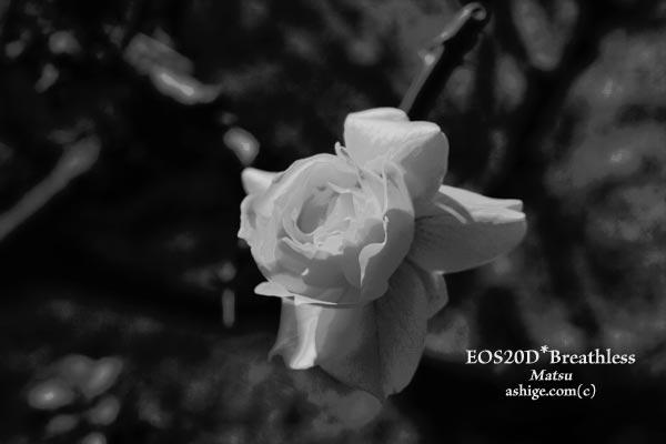 2013 EOS20D*Breathless