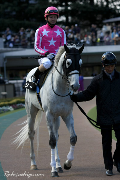 ペリー 2010 東京競馬場