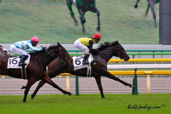 アブソリュカフェ 2013 東京競馬場