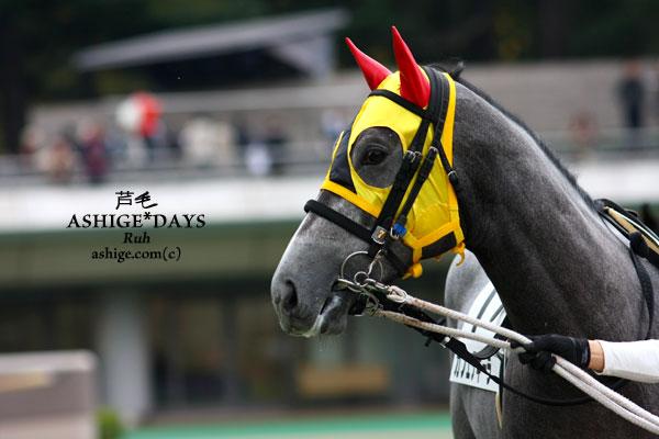 カフェテキーラ ASHIGE*DAYS 2013 東京競馬場