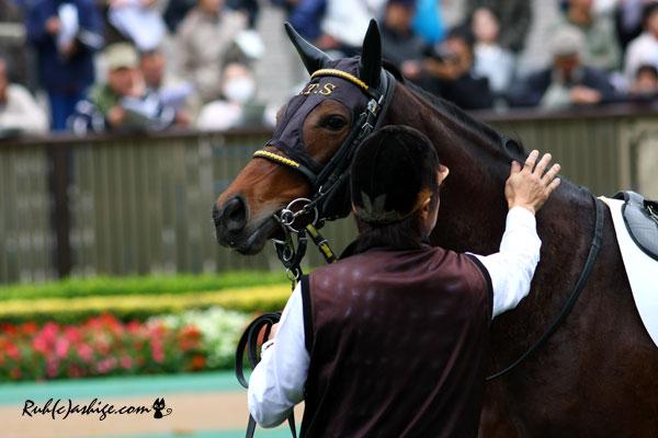 ランスルー 2013 東京競馬場
