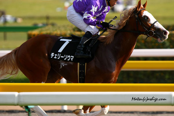 チェリーソウマ 2009 東京競馬場
