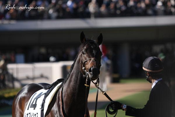 レオプレシャス 2010 東京競馬場