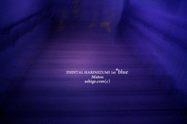 DEDITAL HARINEZUMI*blue 2014