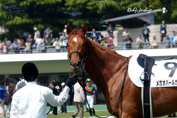 オメガパールカフェ 2014 東京競馬場