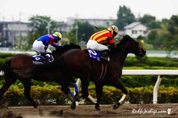 スーニ 2011 浦和競馬場