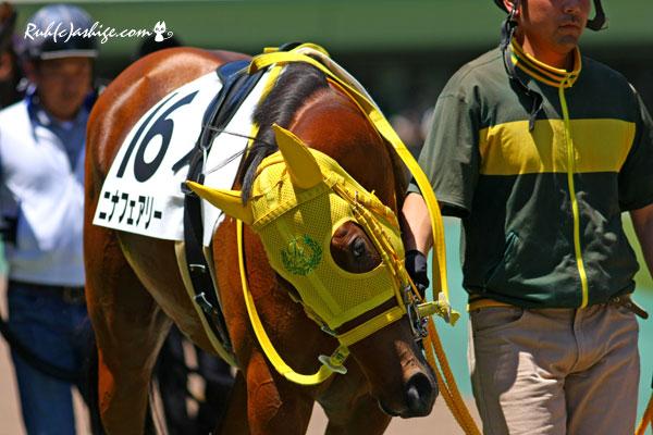 ニナフェアリー 2014 東京競馬場