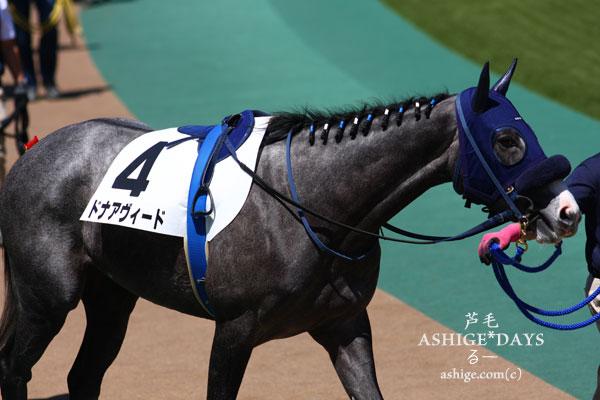 ASHIGE*DAYS ドナアヴィード 2014 東京競馬場