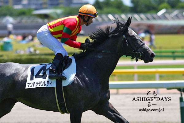 ASHIGE*DAYS マンハッタンレディ 2014 東京競馬場