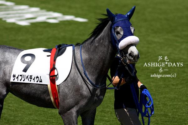 ASHIGE*DAYS サイプリペディウム 2014 東京競馬場