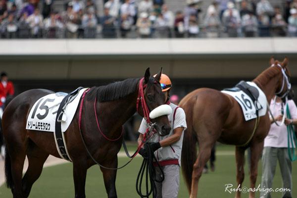 ドリームモモタロウ 2009 東京競馬場