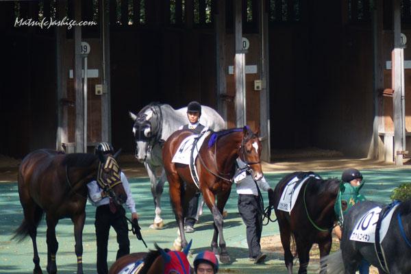 アデイインザライフ 2014 東京競馬場