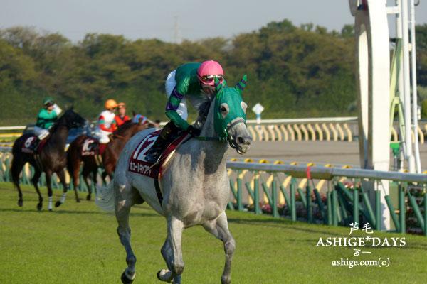 ASHIGE*DAYS ホエールキャプチャ 2014 東京競馬場