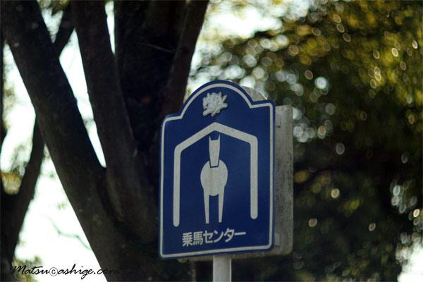 2010 東京競馬場