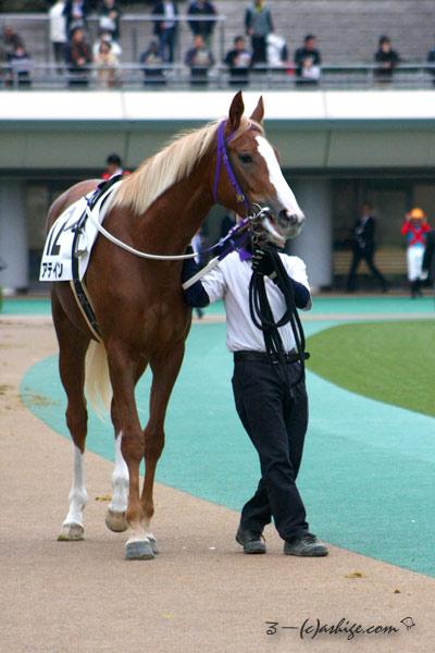 アティン 2014 東京競馬場