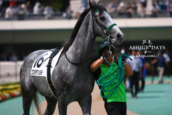 ASHIGE*DAYS コスモボアソルテ 東京競馬場