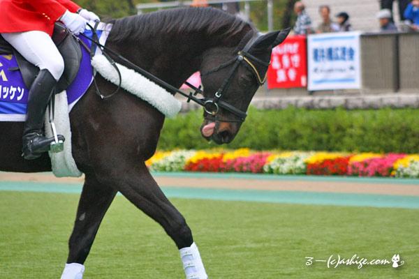 サクセスブロッケン 2014 東京競馬場