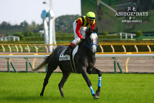 ASHIGE*DAYS ヴァルコイネン 2014 東京競馬場