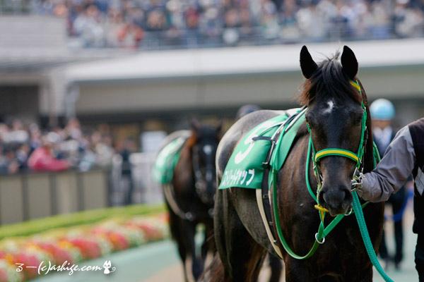 ストリートキャップ 2014 東京競馬場