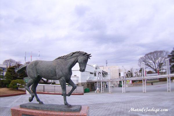 2015 中山競馬場