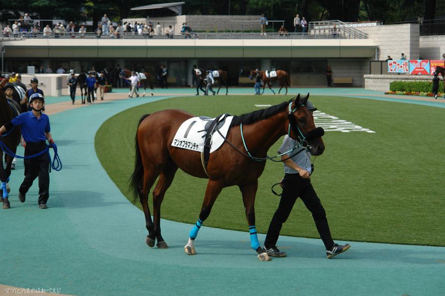 2014 東京競馬場