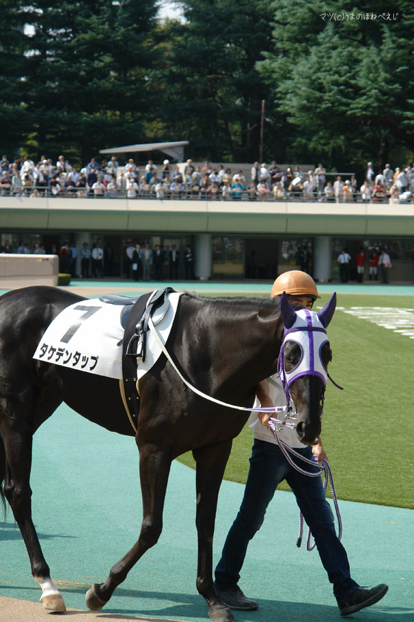 タケデンタップ 2014 東京競馬場