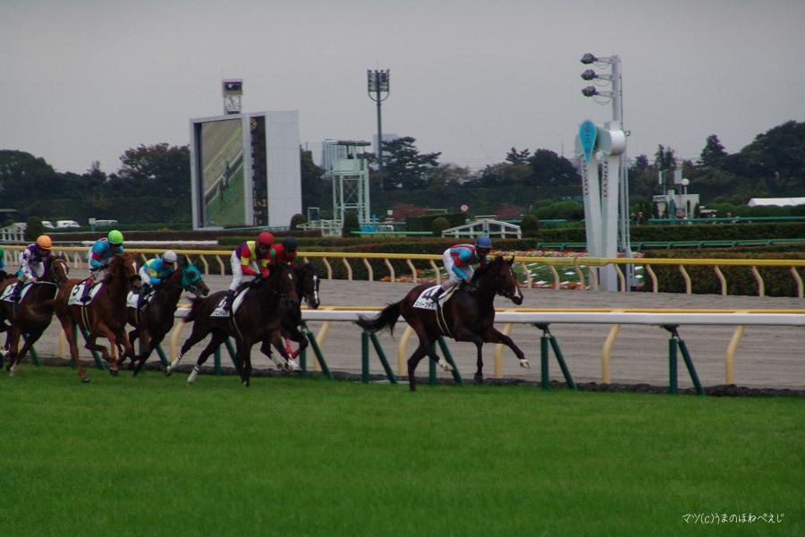 2016 東京競馬場