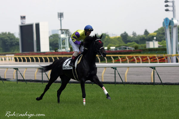 オチャノコサイサイ 2010 東京競馬場