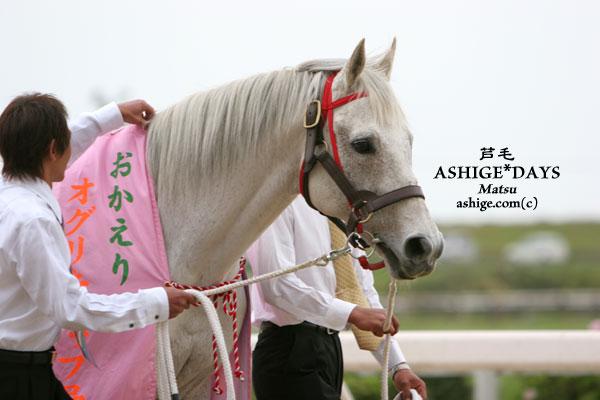 オグリキャップ 2005 笠松競馬場