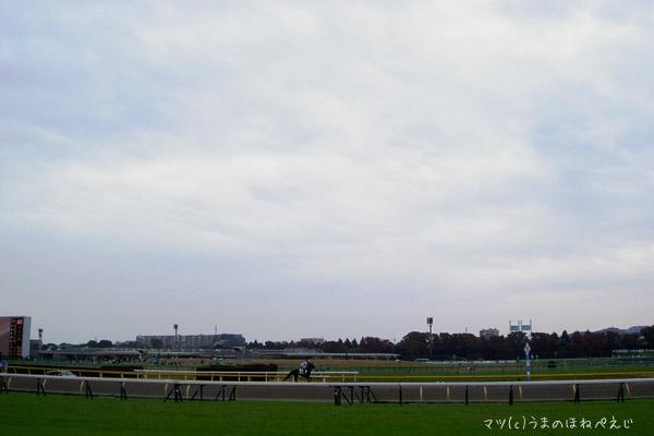 2015 東京競馬場