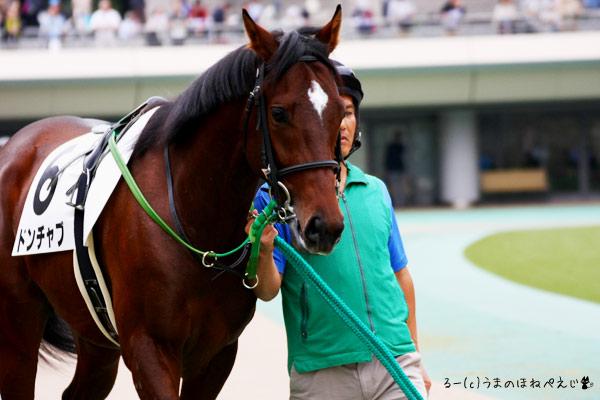 ドンチャブ 2015 東京競馬場