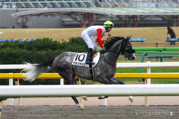 アオジャシン 2015 東京競馬場
