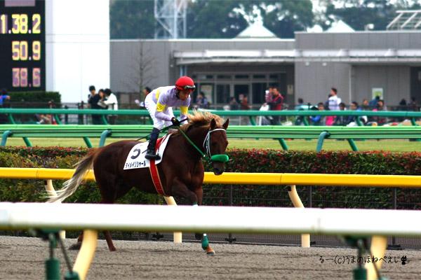 ダイメイリシャール 2015 東京競馬場