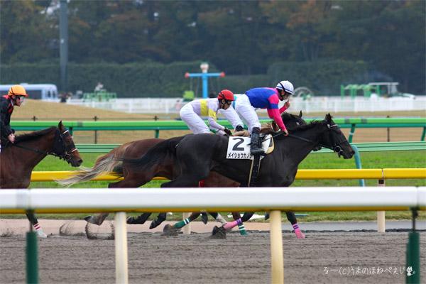 メイショウカノン 2015 東京競馬場
